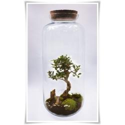 Duży słój szklany, dekoracyjne terrarium do lasów w szkle z korkiem. - 1