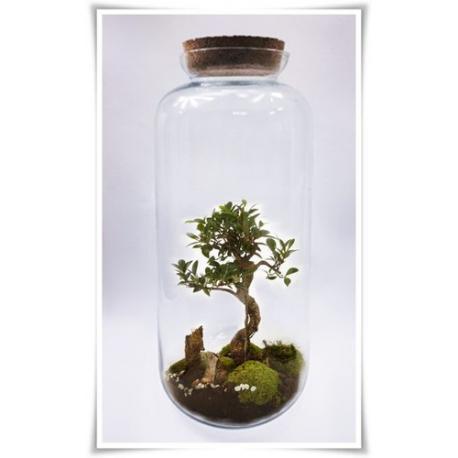 Las w słoiku, szklany słoik z korkiem BAŃKA H-52 cm D-23 cm - 1