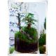 Słój szklany dekoracyjny W-332J H-30 cm D-19 cm / szkło ekologiczne - 4