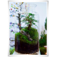 Słój szklany dekoracyjny W-332B H-35 cm D-19 cm / szkło ekologiczne - 5