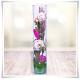 Tuba szklana, wazon cylindryczny H-40 cm D-8,5 cm / szkło ekologiczne - 4