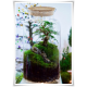 Słój szklany z korkiem W-332B1 H-40 cm D-19 cm / szkło ekologiczne - 2