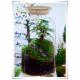 Wazon świecznik pojemnik naczynie słój terrarium H-40 D-15