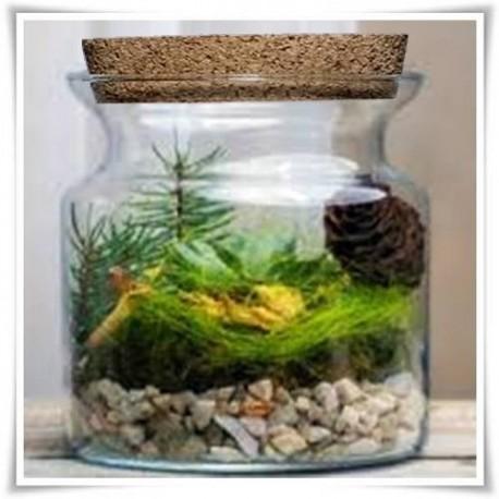 Słój szklany, wazon z ekologicznego szkła do lasów w szkle 15cm z korkiem - 1