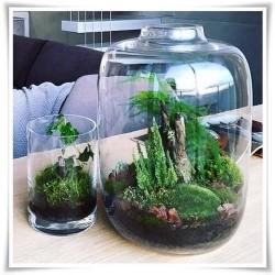 Szklany słój dekoracyjny do mini ogrodów, las w szkle, terrarium 30 cm - 1